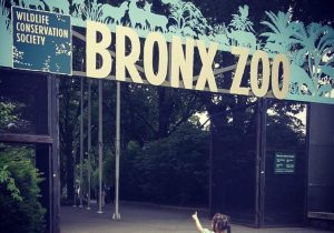 NO MORE PASSING THE ZOO